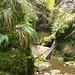 Immergrüne Tüfellschlucht. Erstaunlich wenig Wasser für die Regenfälle der letzten Tage.