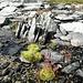 Moose und andere Pflanzen gedeihen auf kargen Boden