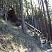 Aufforstung (mit Laubbäumchen) im steilen Fichtenwaldhang