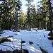 ... danach längeres Wandern im Schnee ...
