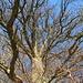 ... hinab zu diesem mächtigen Baum ...
