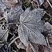 wunderschöne Blätterwelt