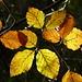 ...colori d'autunno...