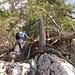 ... des Baumes mit der Leiterhilfe