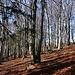 durch den lauschigen Wald hindurch ...