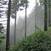 Nebel im Aufstieg zum Schwarzenbeg ...