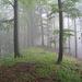"immer noch Nebel: ""Gipfel"" des Tössstocks"