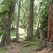 La salita nella foresta indicata dal marcaggio arancione