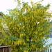 Primavera a Vnà