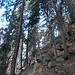 la foresta dei grandi alberi...