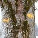 ...zum markanten Baum auf der Hornbachegg führt