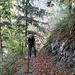 immer wieder atemberaubende Tiefblicke - und durch den lichten Wald Ausblick auf die Rigi-Kette