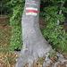 Zeichen der Waldgeister