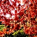 Herbstfarben im Verzascatal
