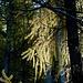 Herbststimmung beim Aufstieg durch den Wald.