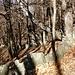 Alpe Scianfone - vom Wald zurückerobert und zerfallen