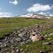 Unterwegs am Kari-See - Ausblick über schöne Bergwiesen in Richtung Aragats-Südgipfel.