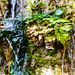 Wasser vom moos'gen Stein 1