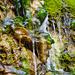 Wasser vom moos'gen Stein 2