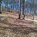 Rientro in zone boscose su sentiero.