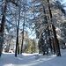 Start auf dem Winterwanderweg