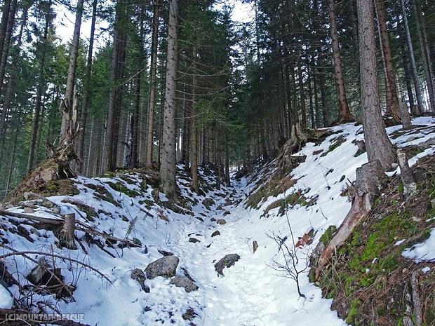 """Die """"Abschneider"""" im Wald sind nur mehr mit größter Vorsicht zu begehen"""