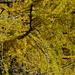 ...fosse sempre autunno...che meraviglia!