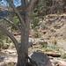 ein Baum, der uns etwas Schatten spendete