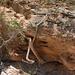 ausgewaschene Felsen