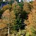 Abstieg nach Pürzelbach durch herbstlichen Wald