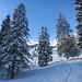 durch frisch verschneite Wälder