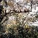 .. und hier ein Baum voller Bromelien