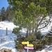 SchneeschuhTrails sind pink markiert. Es gibt [http://www.appenzell.ch/de/wandern-und-aktiv/sportliche-aktivitaeten/schneeschuh-laufen.html Infos] & eine [http://www.appenzell.ch/fileadmin/template_appenzell/user_upload/06_Dokumente/Broschueren_Flyer/Panoramakarte_Winter.pdf PanoramaKarte]