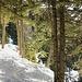 Die roten Pfeile an den Bäumen vermitteln die Route durch den Färnigenwald.