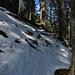 Viel Schnee hat`s nicht im Wald / poca neve nel bosco