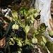 Blumenschmuck am Wegrand