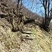das umgefallene Hindernis hat man abgesägt, die zerteilten Baumstämme zieren etwas weiter unten den Wanderweg
