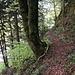Durch einen Wald über eine kurze Anhöhe