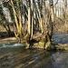 Bauminsel in der Versoix