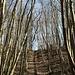 Grenzpfad durch den Wald
