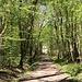 Durch den Wald Le Grands Bois