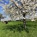 Blütenpracht bei Monniaz