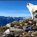 Cima di Biasagn, dieses Gipfelpanorama erfreut selbst ein Hundeherz...