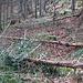 """Diese Bäume wurden absichtlich hier deponiert. Warum der Forst Wege """"tarnt"""", hat sich mir bisher nicht erschlossen"""