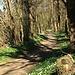 Frühlingsblumen im lichten Wald