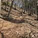 rutschige Waldpartie