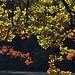 Herbst-Impression