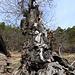Schöner Baum an der Malga Ebnicher