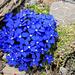 Wunderbar blau...