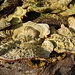 Heute gibts Austern zum Z'Nacht.
